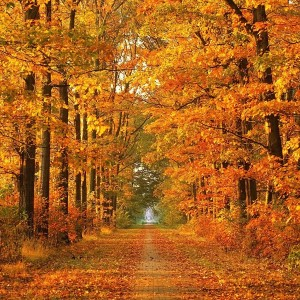 Beautiful-Autumn-Wallpapers-2-321-8599-300x300